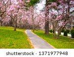 Garden in blossom in Princeton NJ. Spring in Princeton village. Famous university Princeton Plainsboro.