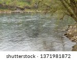 view of the river aare in brugg ... | Shutterstock . vector #1371981872