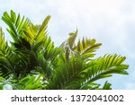 palm sunday background with... | Shutterstock . vector #1372041002