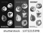 hand drawn coconut icons set... | Shutterstock .eps vector #1372215398