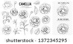outline of camellia flowers.... | Shutterstock .eps vector #1372345295