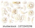 outline of camellia flowers....   Shutterstock .eps vector #1372345298