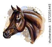 portrait of an arab horse.... | Shutterstock .eps vector #1372351445