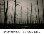 nature after a strong fire. the ... | Shutterstock . vector #1372391312