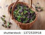 Fresh Purple Dead Nettle...