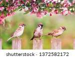 Natural Background With Three...