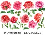 Stock photo big set of flowers roses leaves bud on an isolated white background watercolor hand drawing 1372606628