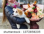 Stock photo bouquet of flowers and puppy dog girl s back and holding a small dog the puppy in his arms 1372858235
