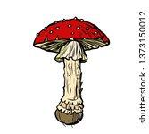 Fly Agaric. Poisonous Mushroom...