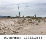 dead tree logs  dry reeds and... | Shutterstock . vector #1373213555
