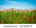 Poppies Field And Blue Sky In...