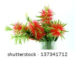 Red Bottle Brush Flower...