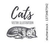 Stock vector kitten sleeps vector illustration kitty hand drawing the cat is sleeping 1373487542