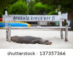 Sea Lion Relaxing On A Beach A...