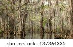 Louisiana Swamp Cypress Trees