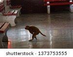 monkey jumped. monkey in free... | Shutterstock . vector #1373753555
