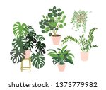 potted plants collection....   Shutterstock .eps vector #1373779982
