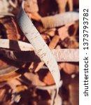 mahogany woodturning chips... | Shutterstock . vector #1373793782