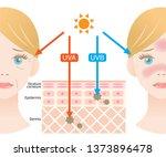infographic illustration of... | Shutterstock .eps vector #1373896478