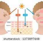 infographic illustration of... | Shutterstock .eps vector #1373897648