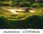 Beautiful Green Moss On Stones...
