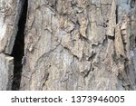 wood texture background surface ... | Shutterstock . vector #1373946005