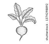 beetroot beet vegetable plant... | Shutterstock .eps vector #1374298892