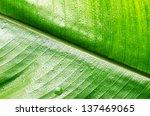Green Wet Leaf Close Up....