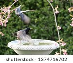 starlings and blackbirds in... | Shutterstock . vector #1374716702