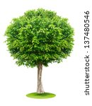 Tree Isolated On White...