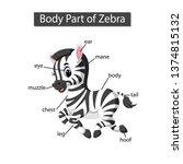 diagram showing body part of... | Shutterstock .eps vector #1374815132