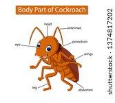 diagram showing body part of... | Shutterstock .eps vector #1374817202