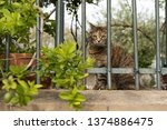 the cat is looking over the... | Shutterstock . vector #1374886475