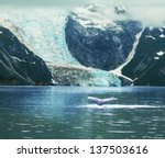 humpaback whale in  alaska | Shutterstock . vector #137503616