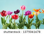 colorful tulips flowers spring... | Shutterstock . vector #1375061678