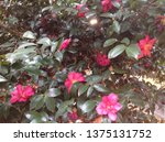 flowers on the tree | Shutterstock . vector #1375131752