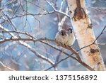 two sparrows on a tree | Shutterstock . vector #1375156892
