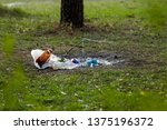 a pile of garbage in the forest ... | Shutterstock . vector #1375196372