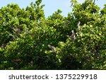 exemplary family resting | Shutterstock . vector #1375229918
