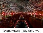 beautiful pink sakura cherry...   Shutterstock . vector #1375319792