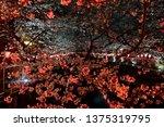 the pink sakura cherry blossom...   Shutterstock . vector #1375319795