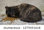cat is eating food on the... | Shutterstock . vector #1375451618