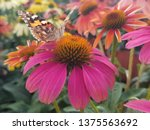 Butterfly On A Coneflower