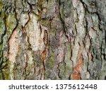 mahogany tree bark | Shutterstock . vector #1375612448