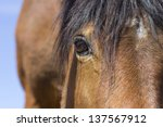 Close up of brown horse eye - stock photo