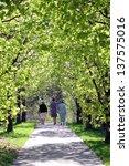 Постер, плакат: A walking trail on