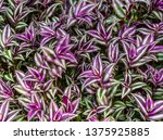Closeup Of The Leaves Of A...