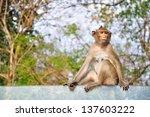 Monkey sitting on glass - stock photo