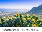 View Of Table Mountain...