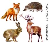 Stock photo watercolor illustration set forest animal hare hedgehog fox and deer 1376127242